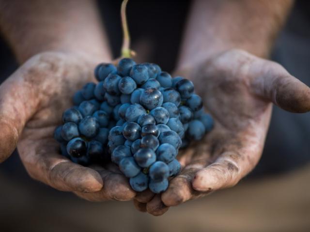 Les Primeurs, le rendez-vous incontournable des vins de Bordeaux