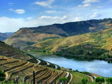 Partez à la découverte des vins du Portugal !