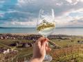 Reconnaître le cépage d'un vin